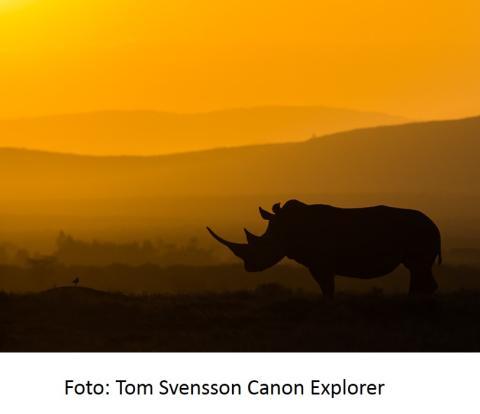 5+1 fototips fra Canon for bedre bilder og filmer når du er på reise