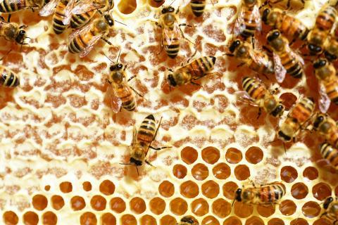 Bin och honung