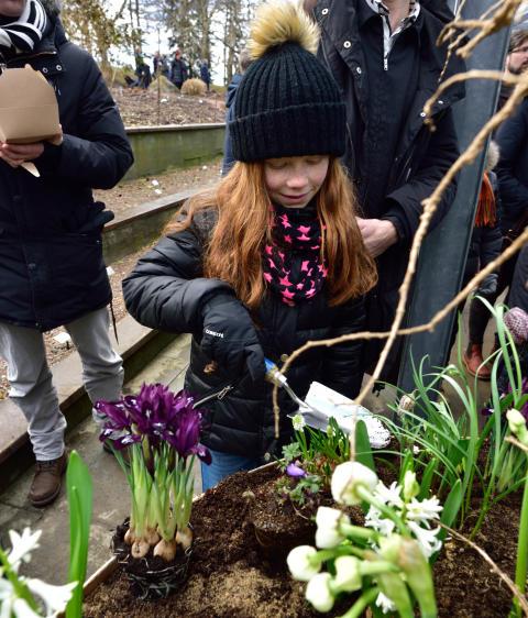 Startskott för våren på Göteborgs botaniska trädgård