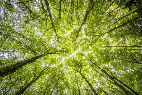 Lendo klimatsatsar - går med i Breakit Impact Challenge