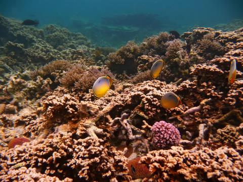 île Maurice_plongée ©MTPA_Bamba