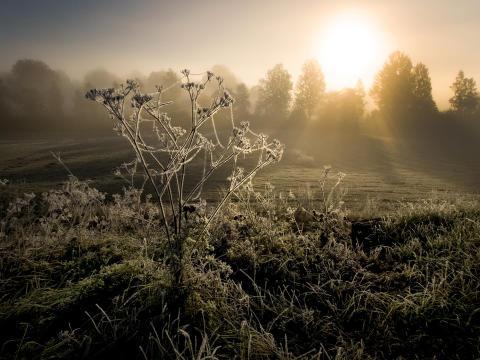 Nordiskt ljus, foto Peter Segemark, Nordiska museet