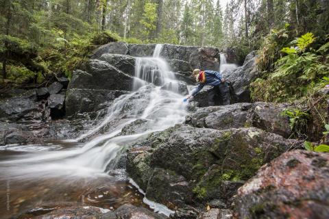 Vandring i Skuleskogen