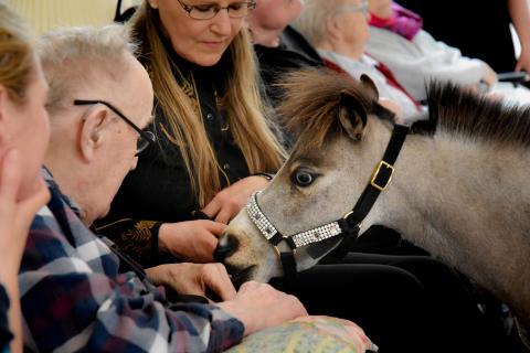 Tæt kontakt mellem hest og beboere