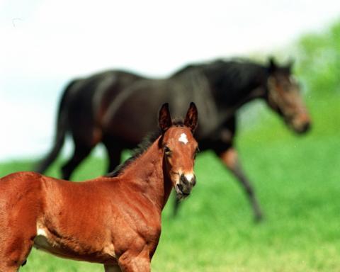 Rasöverskridande hästavelsseminarium