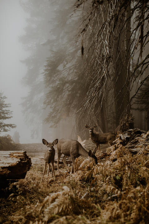 © Justyna Zduńczyk, Poland, Shortlist, Open, Wildlife (Open competition), 2018 Sony World Photography Awards