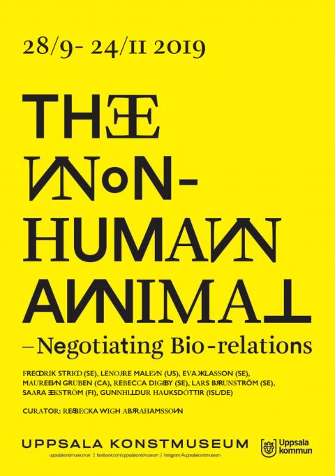 The Non-Human Animal - hand out
