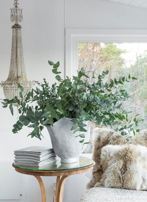 8_eucalyptus