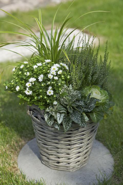 Höstkruka med växter vitt och grönt.