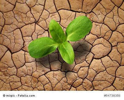 Warum nimmt die Umweltflucht zu? Der Klimawandel als eine Ursache