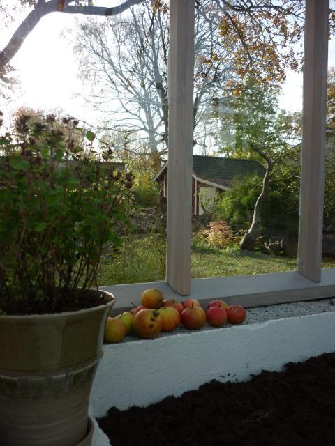 Växthus i privat trädgård