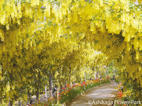 Ashikaga Flower Park(6)