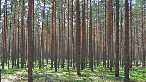 Kan svart kol ersättas av grönt?