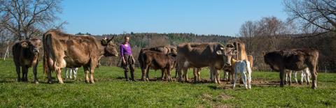 WTG-Rinder-Herde-Mechthild-Knösel