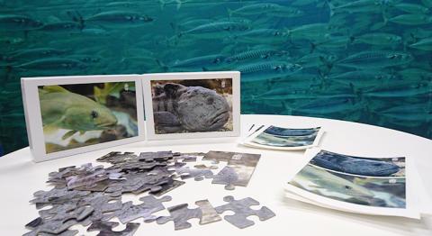 Pussel, pyssel och regler för hummerfiske