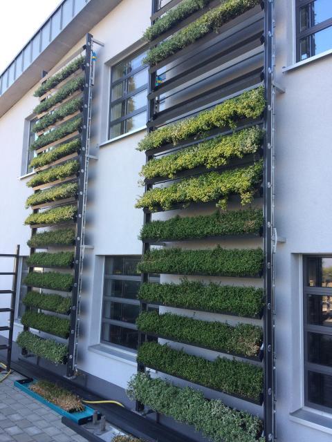 """""""Großstadt-Dschungel"""" neu definiert: Mit cityLam werden Häuserfassaden zu grünen Luftreinigern"""