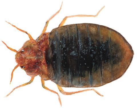 Utlandsresor bakom invasion av kackerlackor och vägglöss i sommar