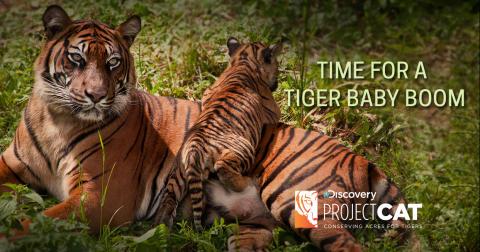 Discovery engagerar sig i kampen för tigrarna