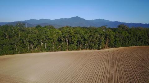 Ødelæggelsen af de tropiske skove har nået et kritisk punkt