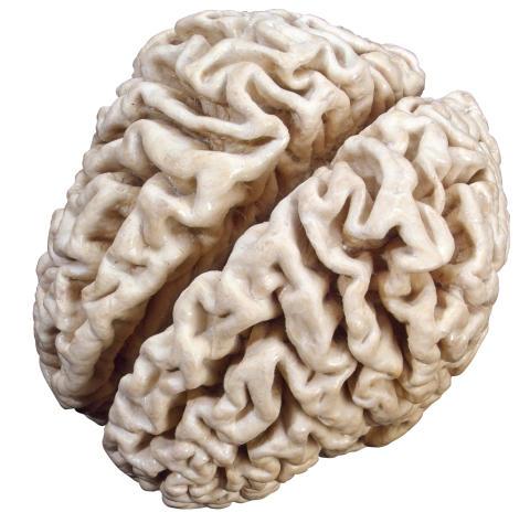 Den sjuka hjärnan