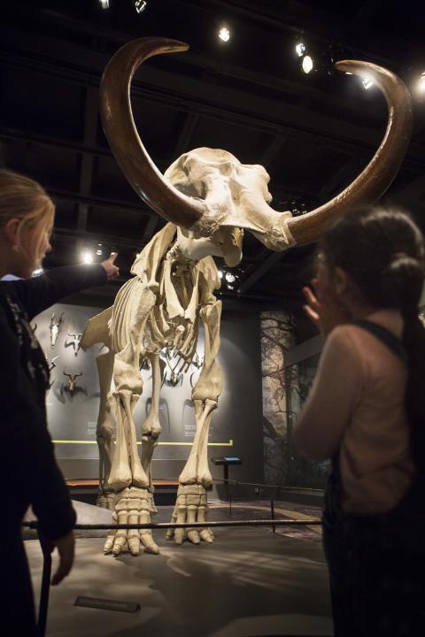 Museets jätte med publik