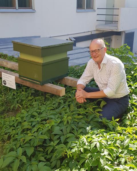 Mehiläisparvi muutti hotelliin kesävieraaksi – Lähes sukupuuttoon kuollut mustamehiläinen sai asuinpaikan hotellin sisäpihalta