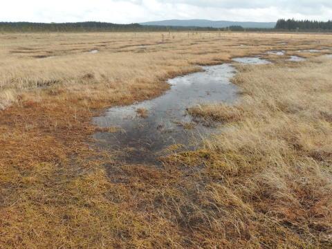 Värdefull våtmark blir naturreservat