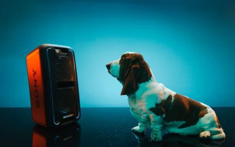 DES HAUT-PARLEURS DE WOUF ! C'est officiel : la gente canine préfère Beyoncé à Beethoven