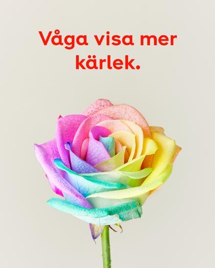 Regnbågsfärgad ros hos Plantagen med uppmaning att våga visa mer kärlek