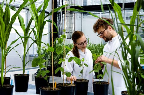 Chr. Hansen reaches 7% organic growth in 2018/19