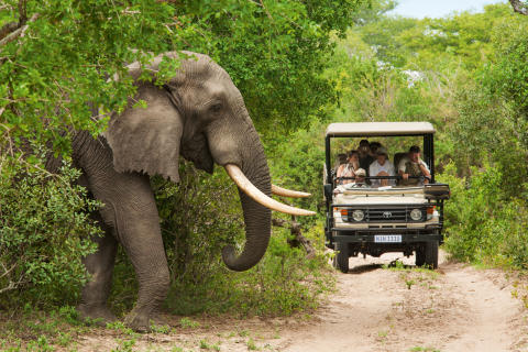 90 reisebyråagenter skal på studietur til Sør-Afrika