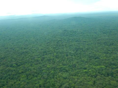 Biologisk station skal hjælpe Nicaraguas oprindelige folk med at bevare skov