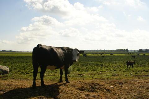 Naturbeteskött vill hjälpa andra lantbrukare utveckla mervärden