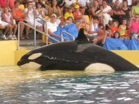 """SeaWorld's new reported 'restrictions' on the Orca show is a """"weak compromise"""""""