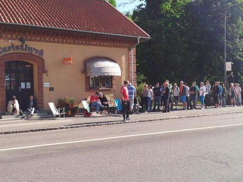 Köerna växer utanför Skövde Turistbyrå