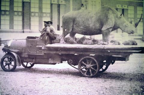 Naturhistoriska riksmuseet 100 år - Noshörning