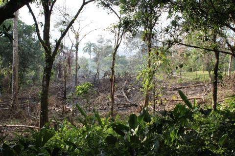 COP23: Risikabel metode til CO2-reduktion truer skovene