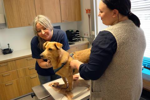 Rescue-koira Rubert omistajansa Riikka Kesäsen kanssa eläinlääkäri Tanja Hakkaraisen vastaanotolla.