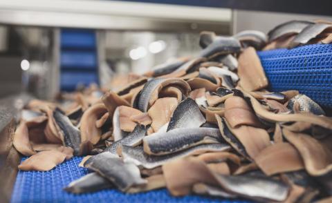 MSC-certifierad sill från Skagerack och Kattegatt gynnar branschen