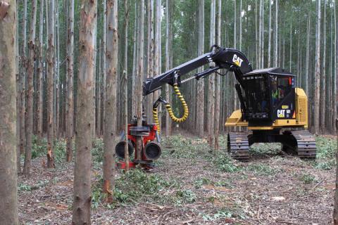 Caterpillar arbejder for regnskovene