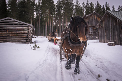 Vinterslädtur Tur o Ton. Foto: Pelle Nyberg