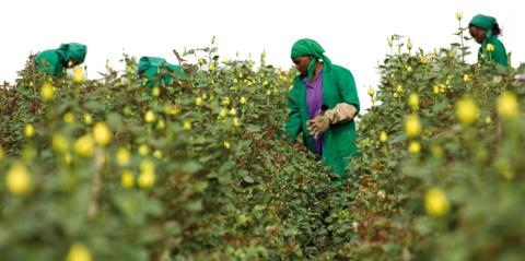 Fairtrade-certifierade rosproducenter besöker Malmö 8 februari