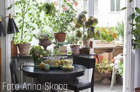 Vår Trädgård och Stora Villamässan - för inspiration ute och inne!