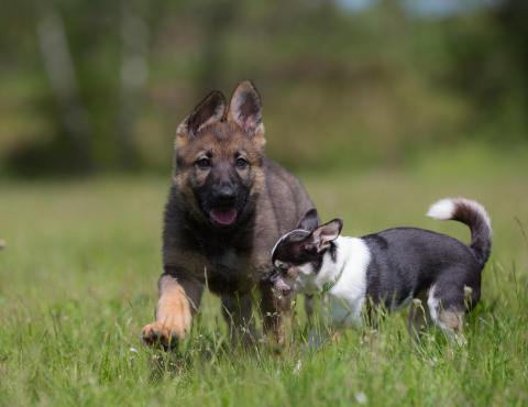 Personlighet viktigast vid hundköpet