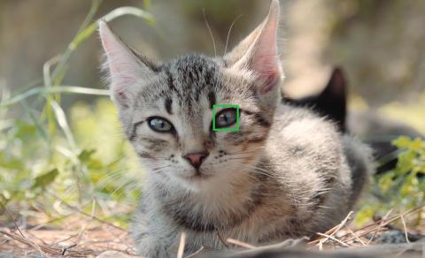 Animal Eye AF 05
