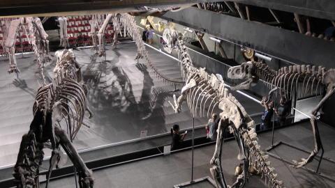 Vy över stora skeletthallen