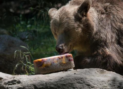 Så håller Skånes Djurpark djuren svala i sommar