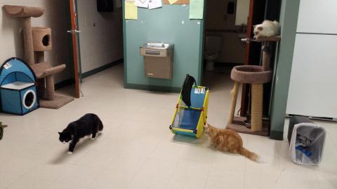 Stressade katter får vänta längre på adoption