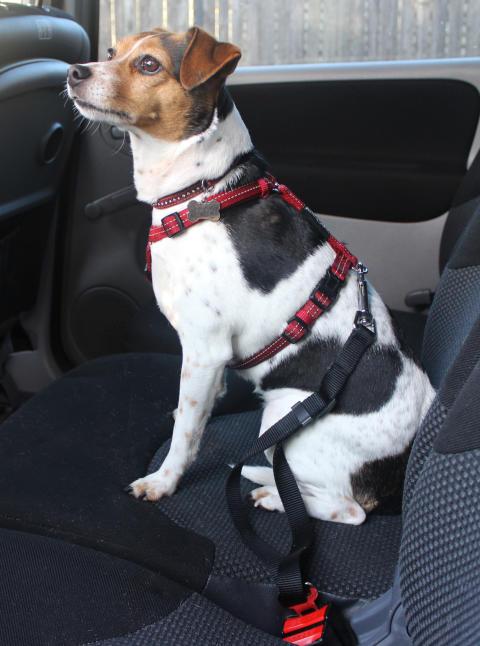 Hund_sele_transport_bil