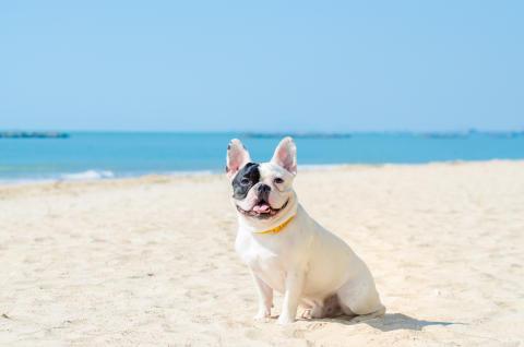 Hit drömmer hunden om att få resa_4